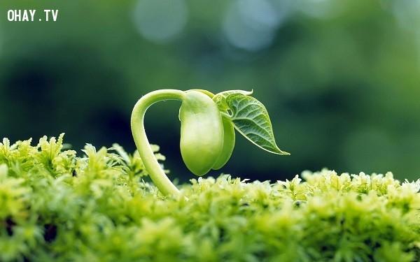 1. Bắt đầu từ những điều nhỏ nhặt…,Bài học cuộc sống từ Đức Phật,kinh nghiệm sống