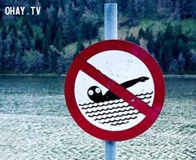 5. Nếu bơi ở đây sẽ cực kỳ nguy hiểm,ảnh hài hước,biển cấm
