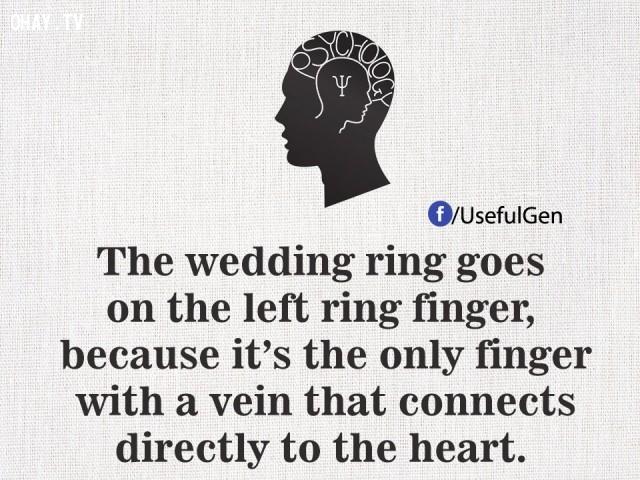 4. Nhẫn cưới nằm trên ngón đeo nhẫn tay trái bởi vì đó là ngón tay duy nhất có một tĩnh mạch kết nối trực tiếp đến trái tim.,tâm lý học,những điều thú vị trong cuộc sống,sự thật thú vị,sự thật đáng kinh ngạc