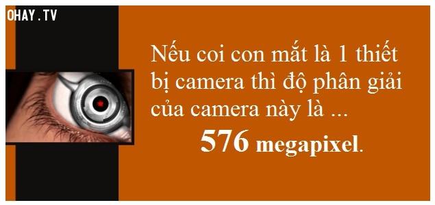 #4 Mắt loài người có độ phân giải bằng 576 megapixel,tìm hiểu về đôi mắt,sự thật thú vị về đôi mắt,khám phá thú vị,những khám phá khoa học thú vị