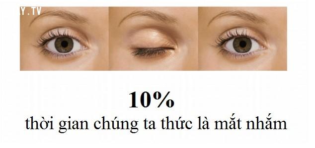 #5 10% thời gian ta thức ta nhắm mắt,tìm hiểu về đôi mắt,sự thật thú vị về đôi mắt,khám phá thú vị,những khám phá khoa học thú vị