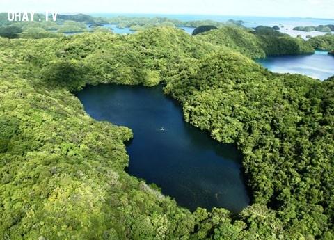 1.Hàng triệu con sứa biến mất.,bí ẩn chưa có lời giải,hiện tượng thiên nhiên