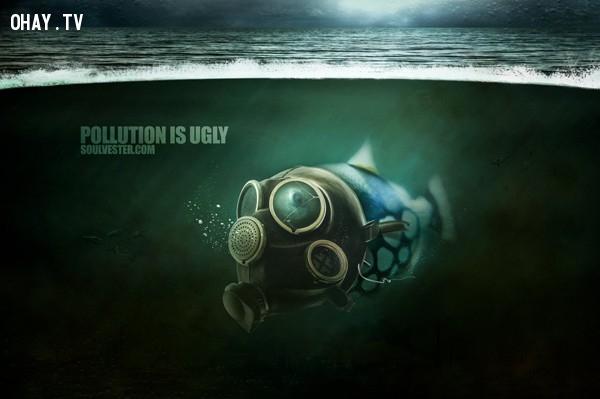 Thêm một bức hình cảnh báo về tình trạng ô nhiễm biển hiện nay,ô nhiễm môi trường,cá chết
