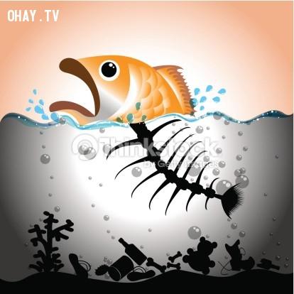 Những chú cá đang chết dần chết mòn vì những thứ chúng ta vứt xuống biển,ô nhiễm môi trường,cá chết