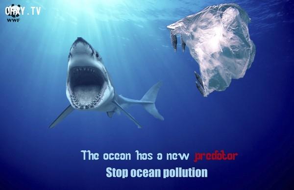 Chai nhựa, bao nilon thả xuống biển cũng nguy hiểm như cá mập vậy.,ô nhiễm môi trường,cá chết