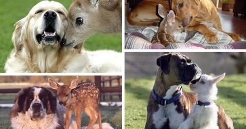 Động vật cũng có 'tình bằng hữu' như con người...