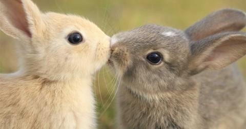 50+ ảnh khoảnh khắc động vật trao nhau những nụ hôn ngọt ngào