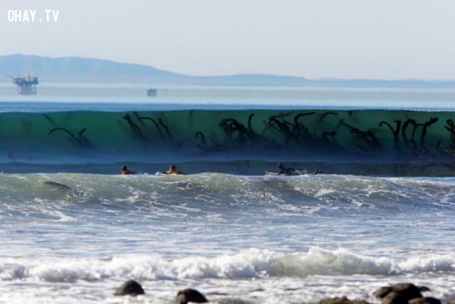Tảo biển trong sóng biển trong giống xúc tu của quái vật biển khổng lồ.,ảnh không photoshop,ảnh kì lạ,khám phá