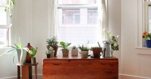 7 Cách trang trí nhà cửa với cây xanh