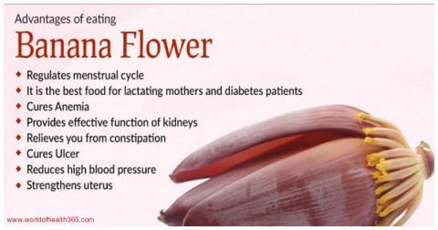 6 Công dụng trị bệnh của bắp chuối