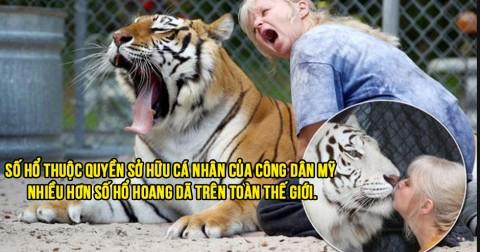 12 sự thật thú vị về loài hổ