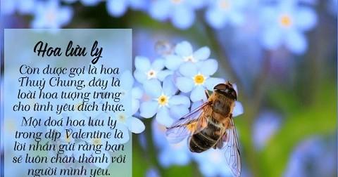 Ngôn ngữ của các loài hoa (phần 2)