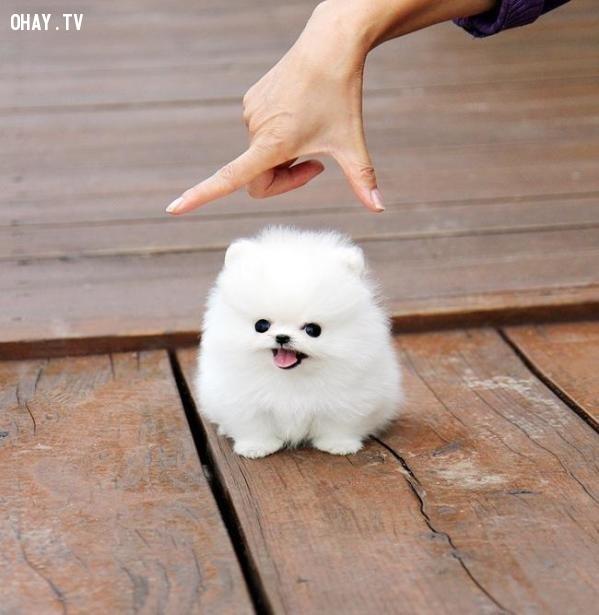 Chú chó bông đáng yêu như thật,vật phẩm