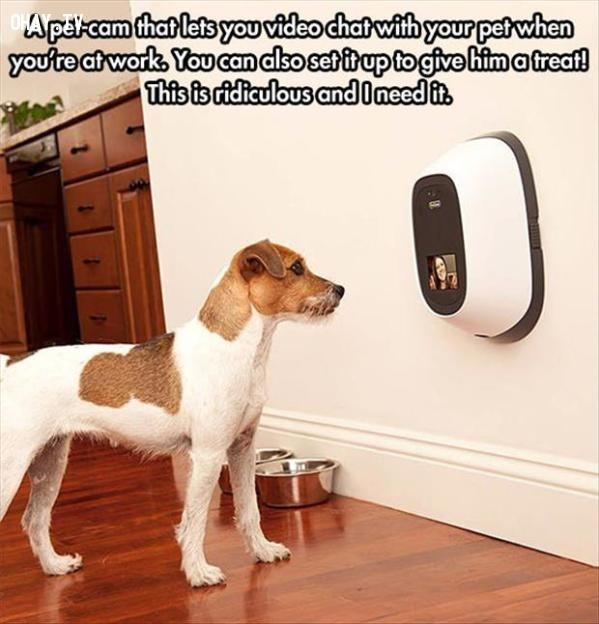 Thiết bị dùng để nói chuyện vơi thú cưng khi bạn vắng nhà ,vật phẩm