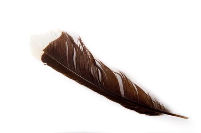 Chiếc lông của chim Huia - $ 10,000,những thứ siêu đắt,siêu du thuyền,khám phá