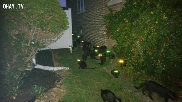 Ánh mắt của những con mèo đen trong đêm. Trông ghê thật!,hình ảnh hài hước,hài hước,ảnh kì lạ