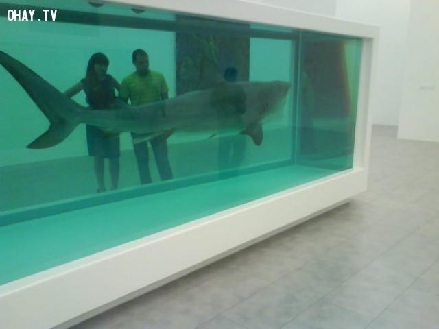 """Tác phẩm nghệ thuật """"Dead Shark"""" của Damien Hirst  - 12 triệu $.,những thứ siêu đắt,siêu du thuyền,khám phá"""