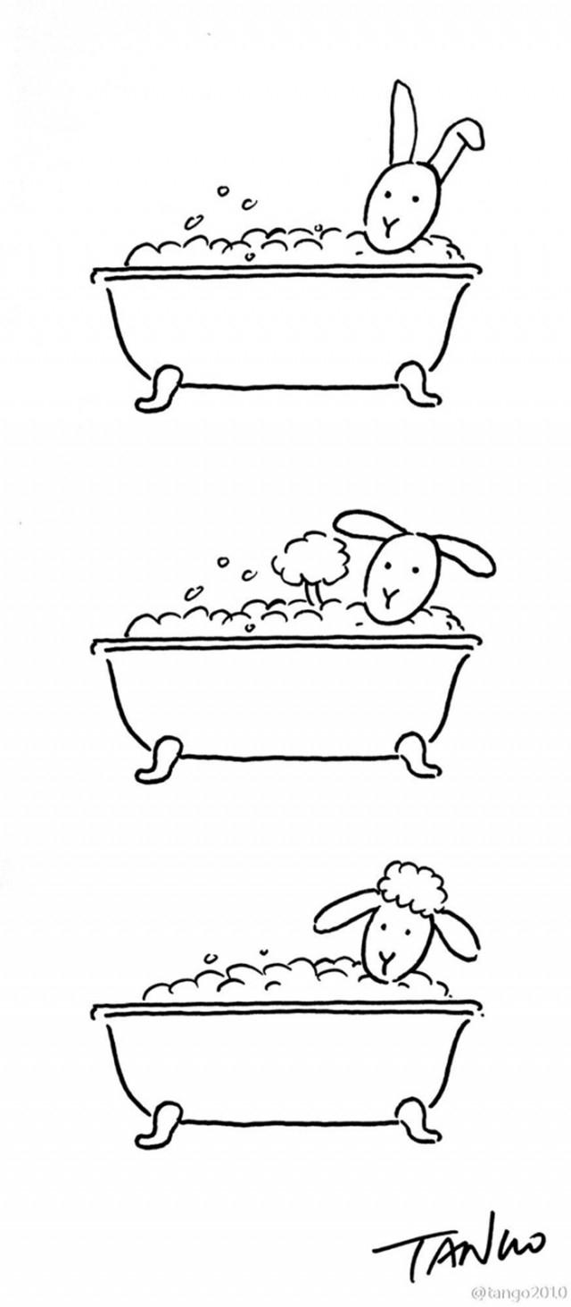 Từ thỏ biến thành cừu,hình hài hước,ảnh vui