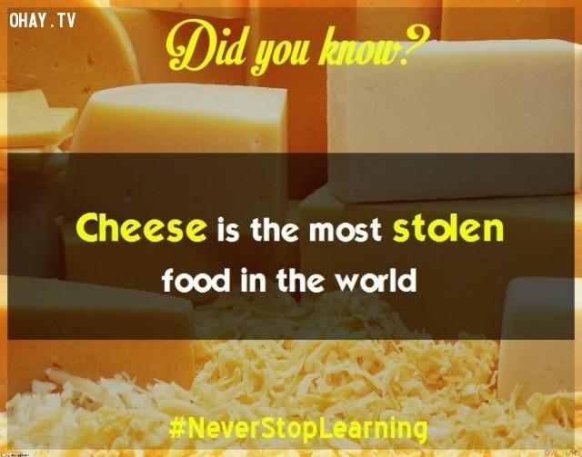 6. Pho mát là thực phẩm bị đánh cắp nhiều nhất trên thế giới.,sự thật thú vị,những điều thú vị trong cuộc sống,sự thật đáng kinh ngạc,khám phá,có thể bạn chưa biết