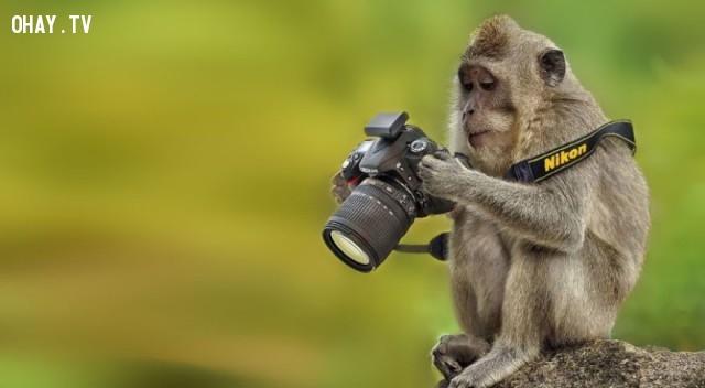 """""""Nhà nhiếp ảnh"""" chuyên nghiệp là đây,bức tranh thú vị,nhà nhiếp ảnh,những con vật"""