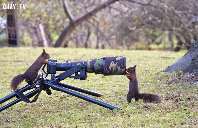 Tớ sẽ chụp cho cậu,bức tranh thú vị,nhà nhiếp ảnh,những con vật