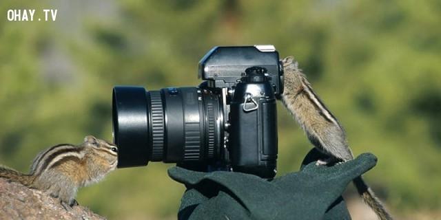 Ok. Mình chụp đây,bức tranh thú vị,nhà nhiếp ảnh,những con vật