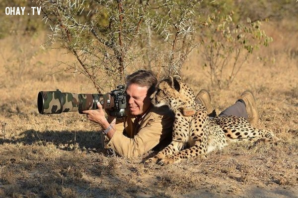 Anh đang chụp gì vậy?,bức tranh thú vị,nhà nhiếp ảnh,những con vật