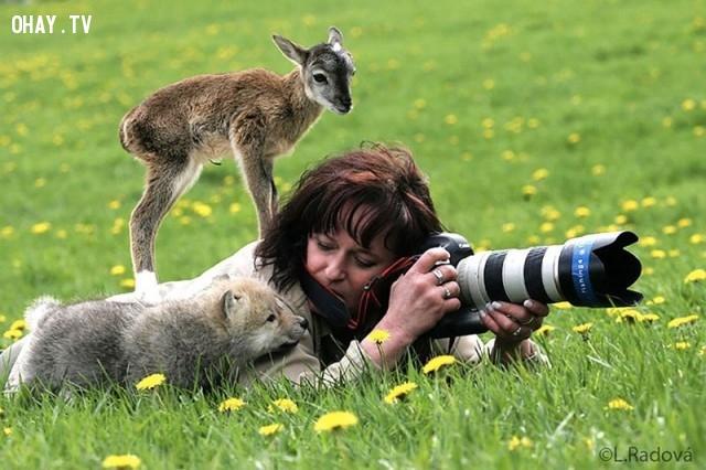 Cho chúng con xem ảnh cùng với,bức tranh thú vị,nhà nhiếp ảnh,những con vật