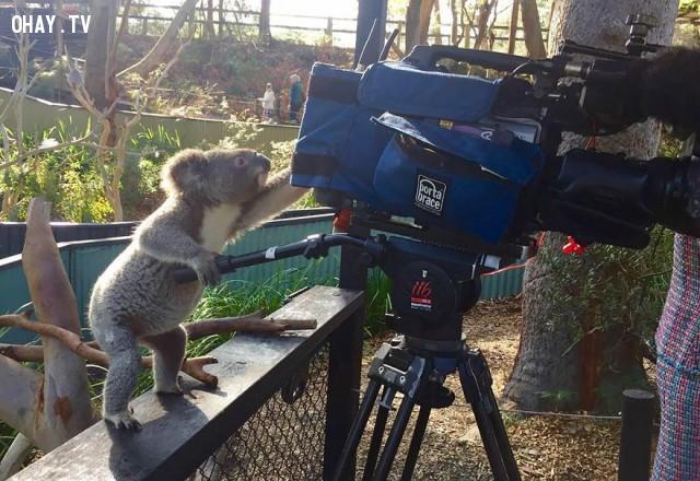 Mình cũng biết quay phim,bức tranh thú vị,nhà nhiếp ảnh,những con vật