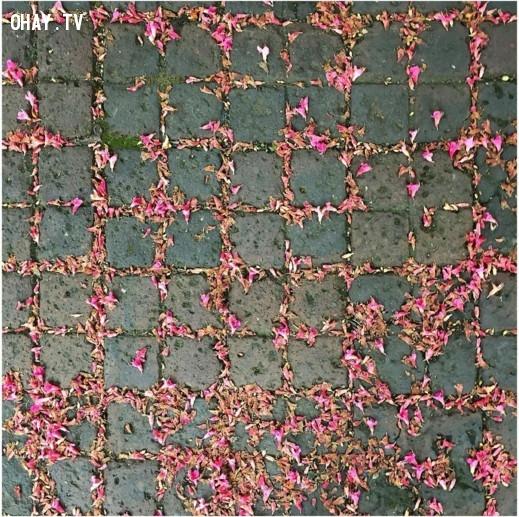 Sự hỗn loạn và trật tự của những cánh hoa rơi trên vỉa hè.,ảnh hoàn hảo,sự hoàn hảo,yêu thích sự hoàn hảo