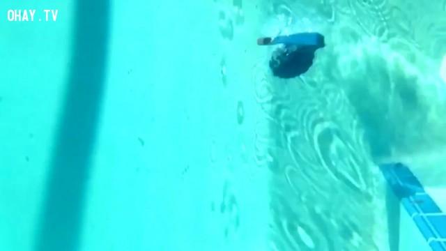 Khi hứng một quả lựu đạn dưới nước bạn sẽ chết nhanh hơn.,khám phá,kiến thức khoa học,những điều thú vị trong cuộc sống