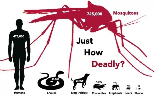 1. Muỗi là động vật gây ra cái chết nhiều nhất trên Trái Đất,muỗi,những điều thú vị trong cuộc sống