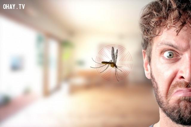 8. Tại sao muỗi thích bay vo vo quanh đầu?,muỗi,những điều thú vị trong cuộc sống