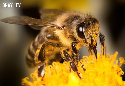 8. Theo một nhóm các nhà nghiên cứu thuộc đại học Queenlands, Úc ong có thể đếm tới 4,những điều thú vị trong cuộc sống,có thể bạn chưa biết