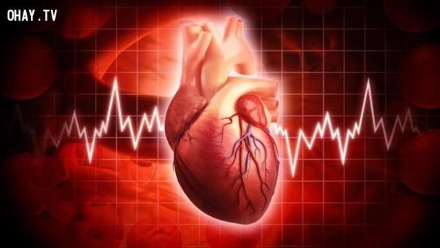 11. Trái tim phụ nữ đập nhanh hơn trái tim đàn ông,những điều thú vị trong cuộc sống,có thể bạn chưa biết