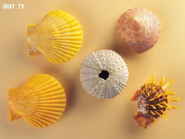 14.Tiếng sóng biển du dương của con ốc khi áp sát vào tai không phải được mang về từ đại dương mà chính là dòng chuyển động của tĩnh mạch trong tai bạn.,những điều thú vị trong cuộc sống,có thể bạn chưa biết