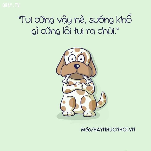 5. Chó lên tiếng,ảnh hài,ảnh minh họa,động vật biết nói,động vật,tranh minh họa