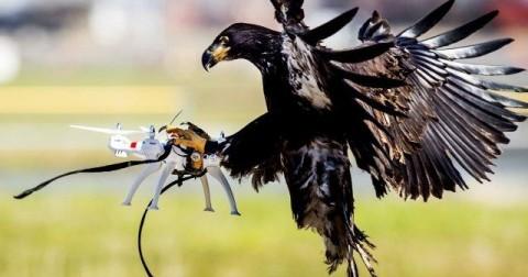 5 cách để tóm gọn các Drone do thám