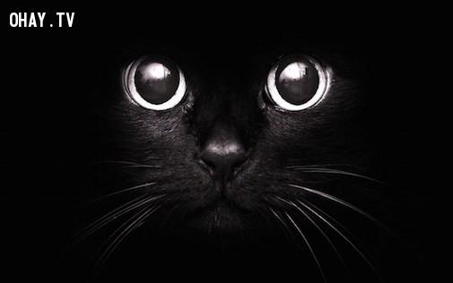 Dùng mèo đen,Cầu cơ,gặp ma