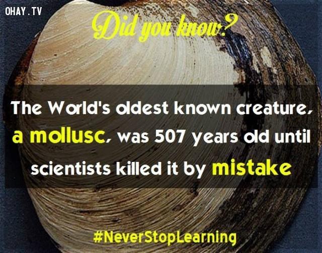 """3. Sinh vật sống lâu nhất trên thế giới là một động vật thân mềm (sò biển Quahog), đã sống 507 năm cho đến khi các nhà khoa học """"lỡ tay"""" giết chết nó.,sự thật thú vị,sự thật đáng kinh ngạc,những điều thú vị trong cuộc sống,có thể bạn chưa biết,khám phá"""