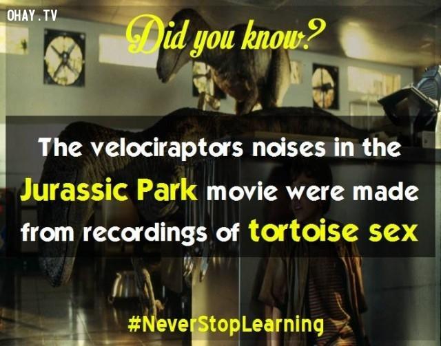 6. Tiếng gầm của khủng long Velociraptor trong phim Công viên kỷ Jura được ghi âm từ tiếng rùa giao phối. ,sự thật thú vị,sự thật đáng kinh ngạc,những điều thú vị trong cuộc sống,có thể bạn chưa biết,khám phá