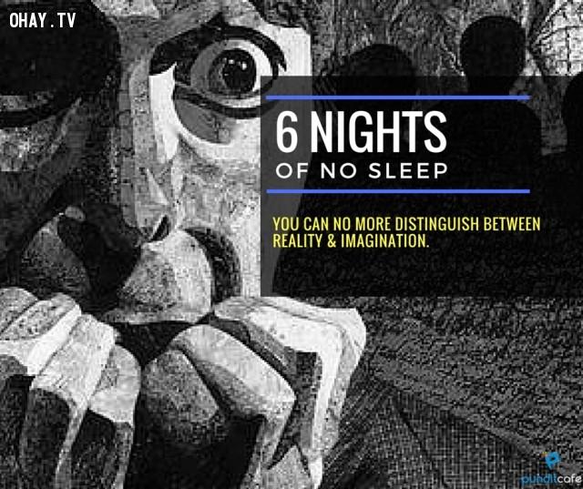 6. Sáu ngày không ngủ,thiếu ngủ,chứng mất ngủ,khám phá,mất ngủ có hại gì,thiếu ngủ có tác hại gì