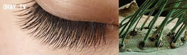 Hình ảnh lông mi được phóng to lên 50 lần. Vì lông mi có tác dụng cản bụi bay vào mắt nên ta có thể thấy những lớp bụi bao quanh chân lông mi,khám phá,nhìn đồ vật dưới kính hiển vi
