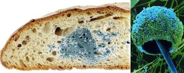 Bánh mì mốc dưới ống kính hiển vi,khám phá,nhìn đồ vật dưới kính hiển vi