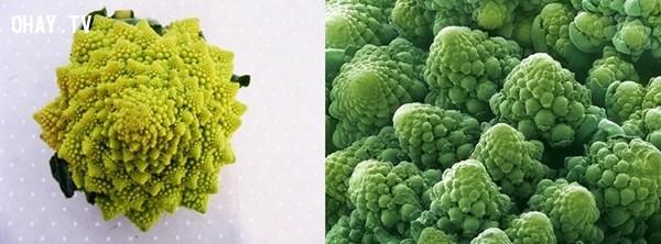 Hình ảnh phóng to của bông súp lơ,khám phá,nhìn đồ vật dưới kính hiển vi