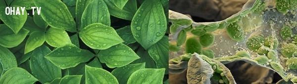 Hình ảnh dưới kính hiển vi của một lá cây,khám phá,nhìn đồ vật dưới kính hiển vi