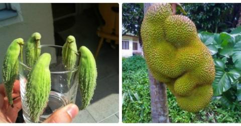 20 loại trái cây và rau củ có hình dạng vô cùng kỳ lạ khiến bạn phải nhìn lại lần thứ hai
