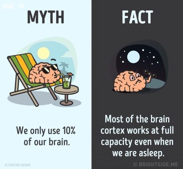 1. Chúng ta chỉ sử dụng 10% bộ não. Sự thật là hầu hết các vùng vỏ não làm việc hết công suất ngay cả khi chúng ta đang ngủ.,nhận thức sai lầm,sự thật bạn luôn tin là đúng,khám phá,những điều thú vị trong cuộc sống,sự thật thú vị