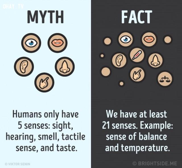 5. Con người chỉ có 5 giác quan: thị giác, thính giác, khứu giác, xúc giác và vị giác. Sự thật là chúng ta có ít nhất 21 giác quan, chẳng hạn như cảm giác cân bằng và nhiệt độ.,nhận thức sai lầm,sự thật bạn luôn tin là đúng,khám phá,những điều thú vị trong cuộc sống,sự thật thú vị
