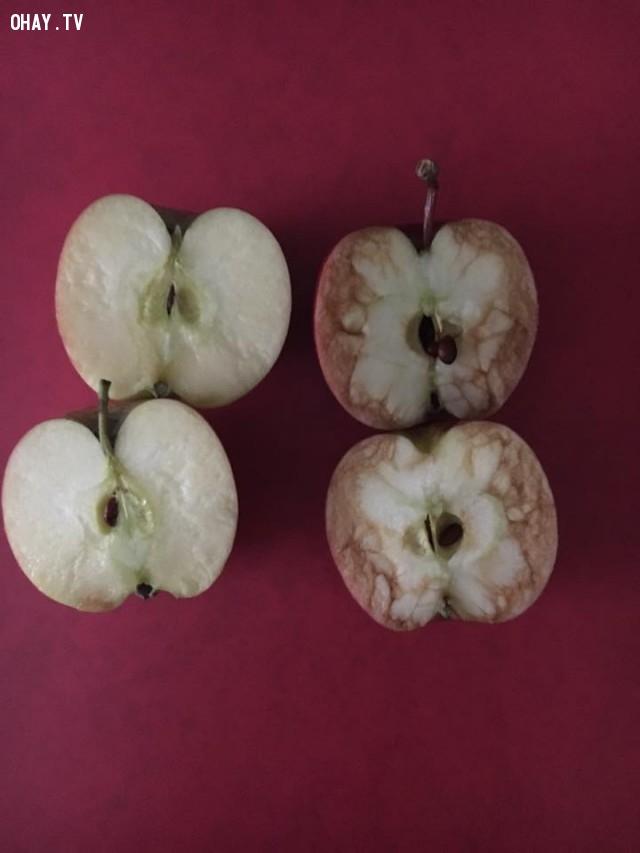 Quả táo bị chúng tôi chê bai thì héo và bầm dập hết cả. ,sự tổn thương,cách dạy con,nuôi dạy con,bài học cuộc sống